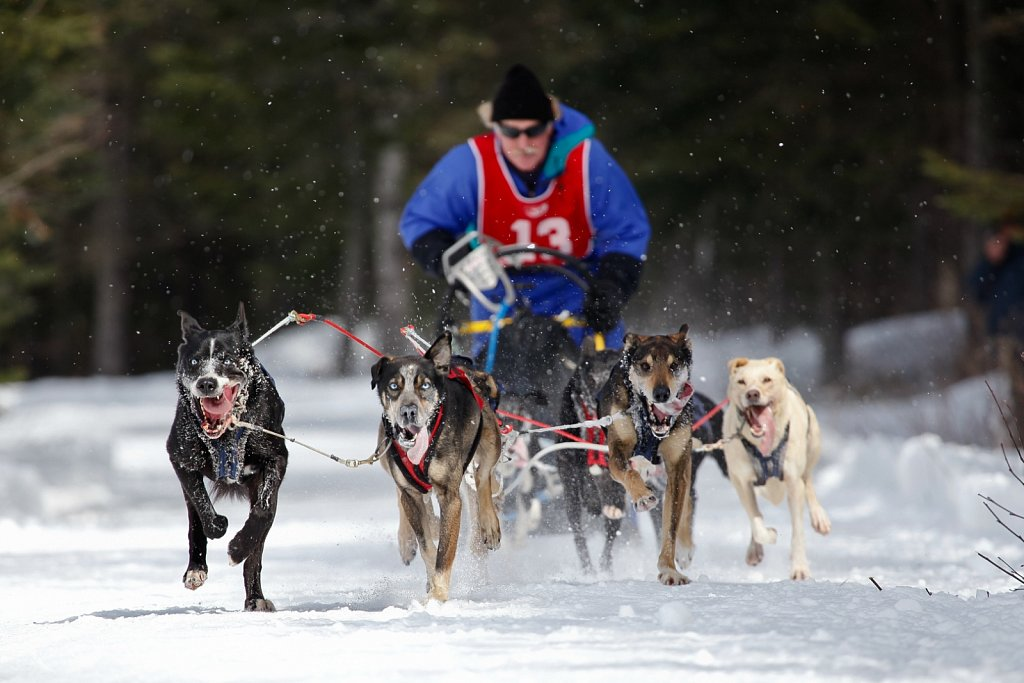DAAQUAM International Sled Dog Championship